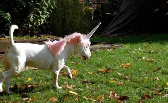 Normal_unicorn_fight