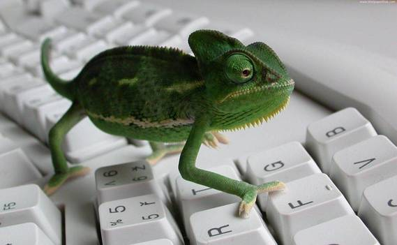 Normal_animal-on-keyboard